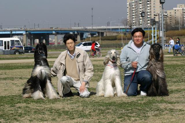 From the left, Tai (Kor. CH. Adorah's Taipa Sahale), me, BB (Kor. Grand CH. Beatrice La Bibijond of Anastasia), BB's owner and Blue (Am & Can CH. Japonica's Barrel Of A Gun)