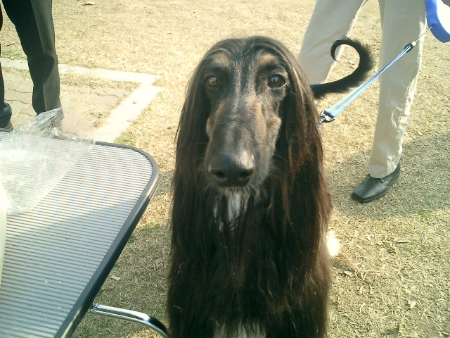 This photo was taken at FCI Int. Dogshow although we did not entered.